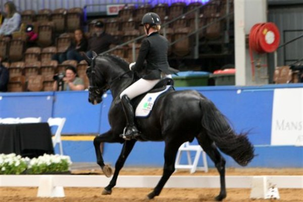 Braveaux and Gina Montgomery finished first in round one of the five year old young horse class - © Roger Fitzhardinge