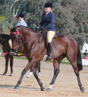 Brooke Sweeney and her retired racehorse Amber Cavalier