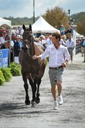Chris Burton and Cooley Lands trot up - © Michelle Terlato