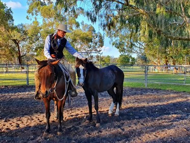 David specialises in foundation training for young horses.
