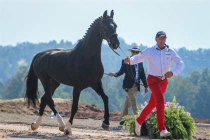 Driving trot up - © Tryon