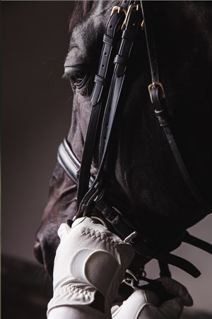 Ensure your noseband complies with the two finger rule - Labelled for reuse