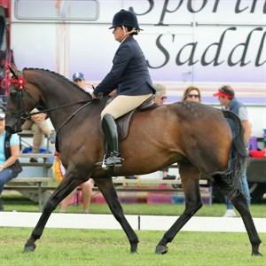 Fiona McIntyre and Caravan Rolls On. Image: Virtual Windsor Horse Show entry