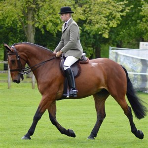 HM The Queen's winning Celeverland Bay, Wyevale Harry ridden by Matthew Powers. Image: Virtual Windsor Horse Show entry