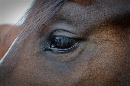 Horse eye - Labelled for reuse