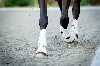 Horse legs - Shutterstock, no credit needed