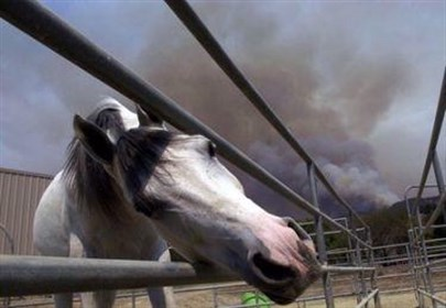 Horses and smoke. Photo: UC Davis