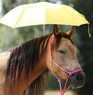 How to beat heat stress in horses.