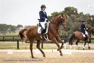 Lindsey Ware and Let's Jazzaround in the FEI Junior Individual 14-18 years.