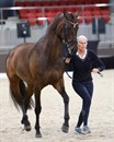 Mary Hanna and Syriana in the trot up for the Grand Prix CDI. © Roger Fitzhardinge