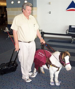Miniature horses accepted to fly as service animals © Wikimedia Commons