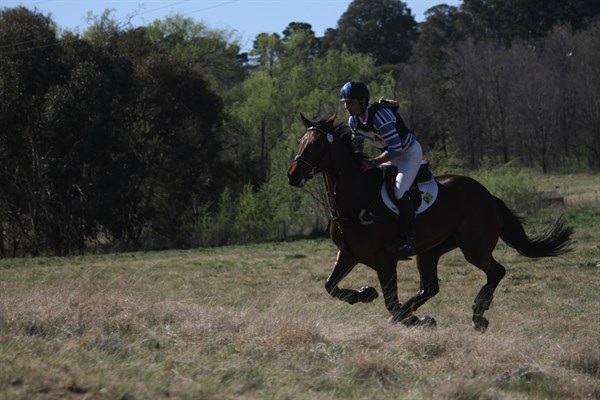 Shane Rose and Swiper in the 3* with Willberry the Wonder Pony attatched! © Fiona Gruen from Wallaroo Equestrian