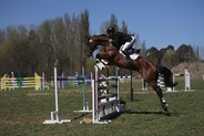 Shane Rose and Swiper in the showjumping phase of the CIC3*. © Fiona Gruen from Wallaroo Equestrian