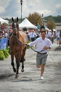 Shane Rose and Virgil in the trot up - © Michelle Terlato