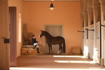 The beautiful historic stallion barn. © Archiv Boiselle