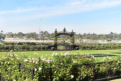 The roses around the mounting yard are just beginning to bloom; the plan is to have them peak in time for the Spring Racing Carnival. © Getty Images