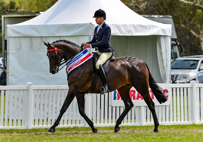 Total Fashionista ridden Romsey Park's Greg Mickan at Barastoc Horse of the Year Show 2020