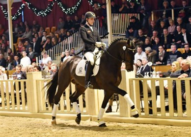 Zum Glu¨ck, the highest priced horse at the P.S.I. auction. © Fotodesign gr. Feldhaus